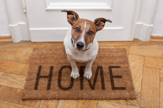 Adoption shelters are committed to helping you find a pet