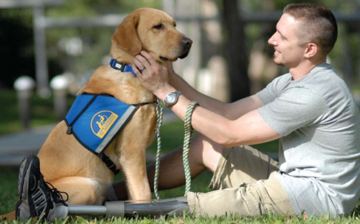 Service dogs know when they are working and when they are 'off'
