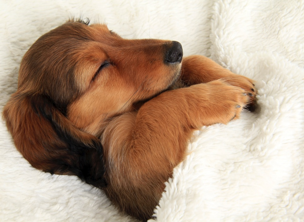Dogs dream just like us