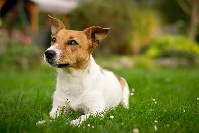 Dog's have an exponentially stronger sense of smell than humans