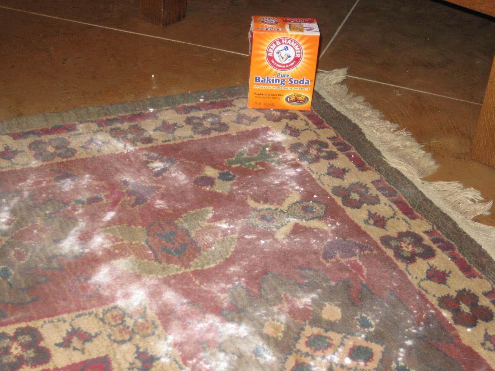 Get vomit off your carpet