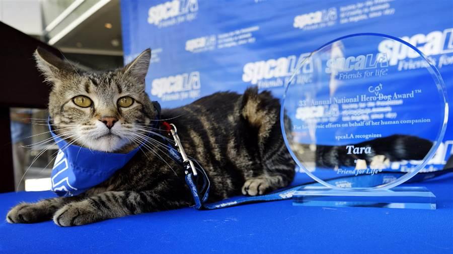 Tara The Hero Cat – Earns $55,600 – $463,700 Annually