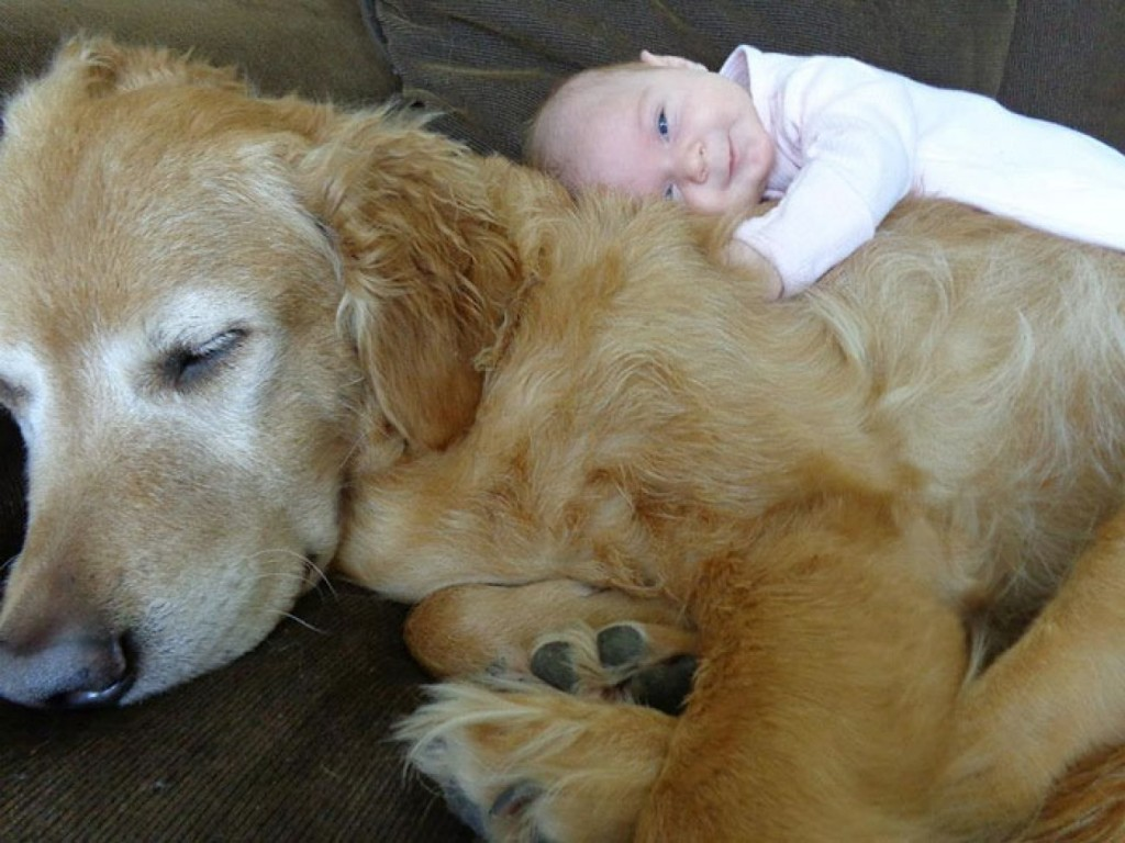 A Big Furry Pillow