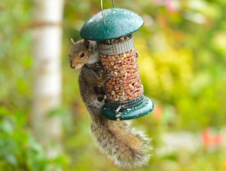 Guarding Bird Feeders