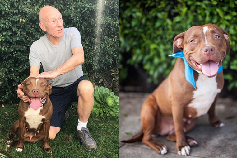 The BSL Ban