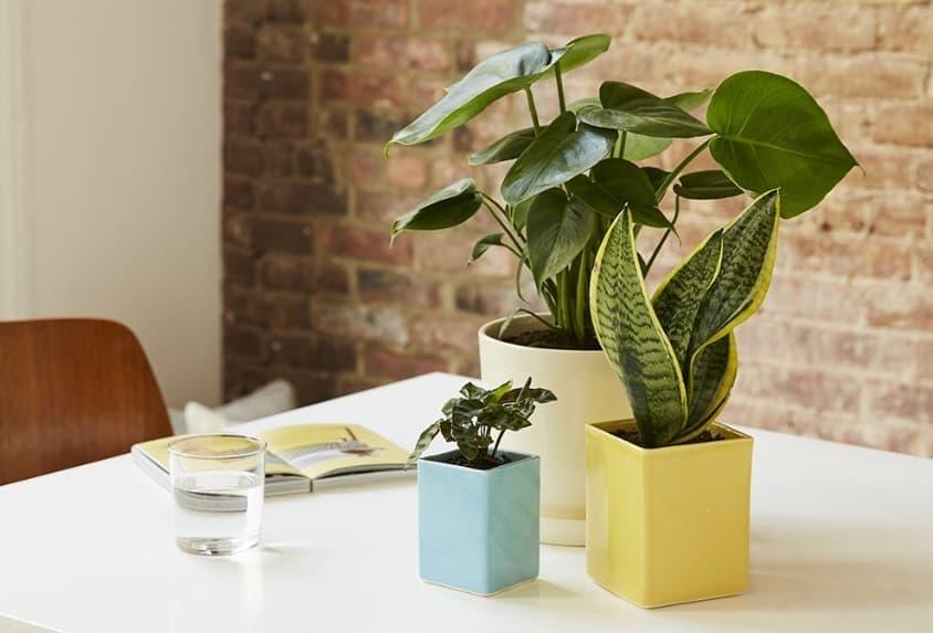 Shining Plants